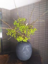 「せんだん」(Sendan Tree)