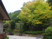 「桂の木」(Katsura Tree at Gorahanaougi)