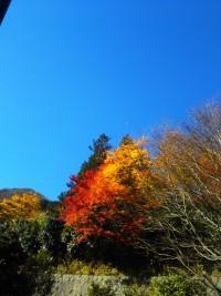 「秋の一日」(Ideal Weather)