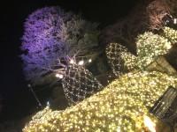 「強羅公園-スプリングナイトガーデン-」(Spring Night Garden In Gora park)