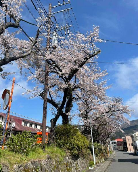 【桜満開 ~露天風呂付客室の宿 円かの杜~】